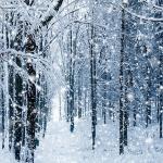 Na neve existe Deus: a beleza incrível dos flocos de neve