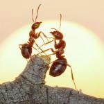 Os insetos têm consciência espiritual?