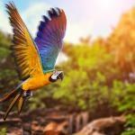 Ornitomancia: adivinhe o futuro de acordo com os pássaros