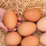 Ovomancia: a arte de adivinhar com ovos