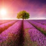 Aromaterapia e Cromoterapia – unidas para trazer a cura