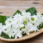 Ayurveda na mesa: receitas para o dosha Vata