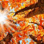 Equinócio de outono - faça o ritual para celebrar a chegada da estação