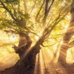 Existem rituais no espiritismo?