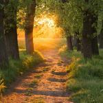 Salmo 59: como proteger o seu povo de todo o mal