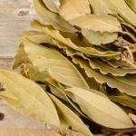 Simpatia com folhas de louro: mais prosperidade na sua vida