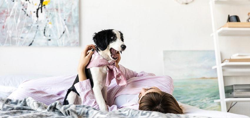 Feng Shui: e os animais de estimação?