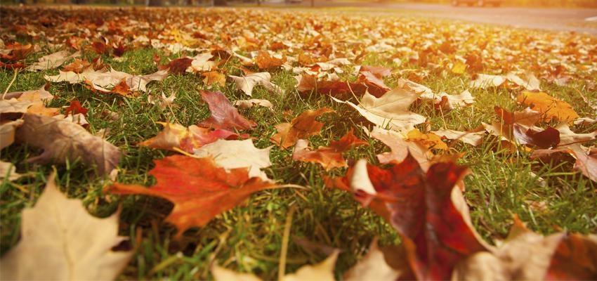 5 Simpatias de Outono que vão mudar a sua vibração