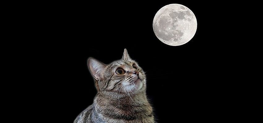 Influência da lua sobre os animais: você sabia?