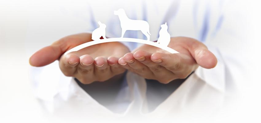 Conheça benzimento para animais de estimação