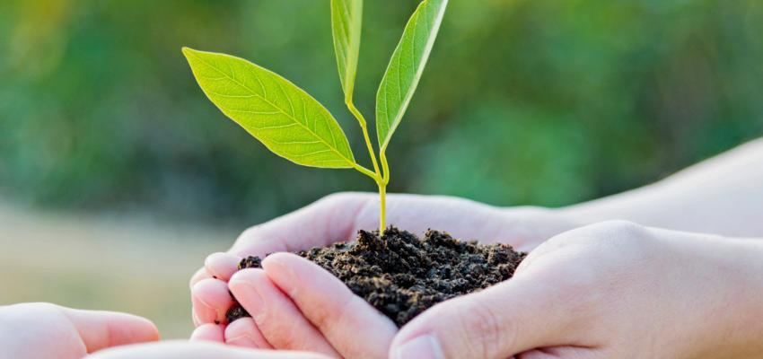 10 plantas que o Feng Shui NÃO recomenda na harmonização da casa