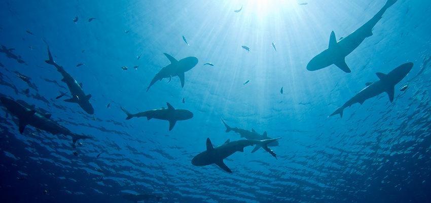 Sonhar com tubarão — Será que existe algo te preocupando?