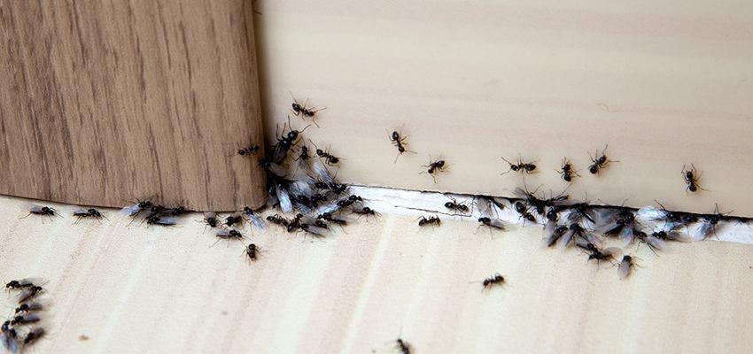 Você conhece a mensagem oculta dos insetos?
