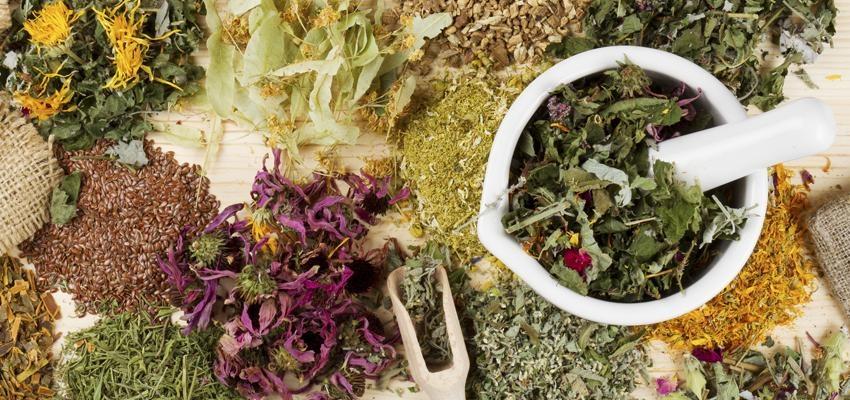 Descubra a cura pela natureza através das ervas em 6 perfis do Instagram