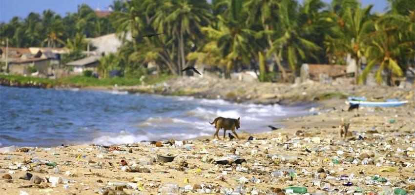 Projeto troca lixo da praia por aulas de stand up paddle