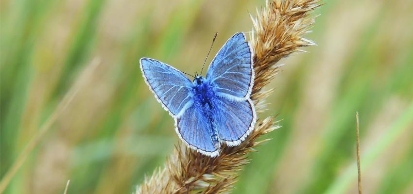 Lenda da borboleta azul – o destino em suas mãos