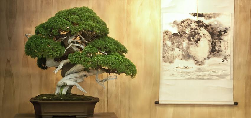 Quais plantas o Feng shui recomenda para cada área? Descubra!