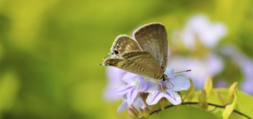 Conheça o significado espiritual da mariposa e seus simbolismos