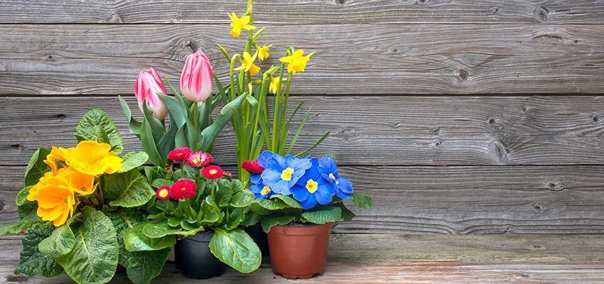 Conheça a planta ideal para cada signo do zodíaco