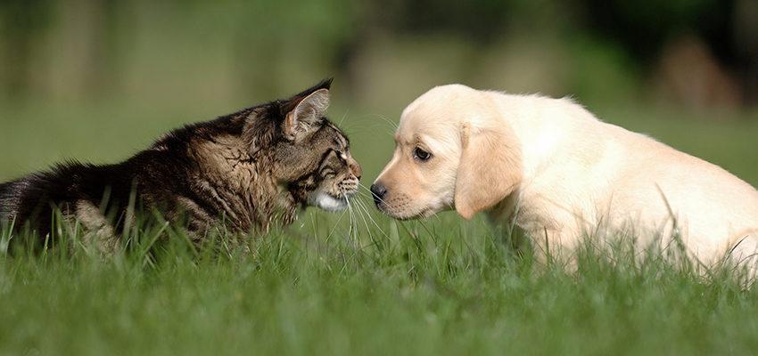 Gato ou cachorro? O que diz o seu signo sobre essa escolha