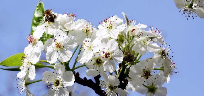 6 essências florais mais indicadas para combater o stress