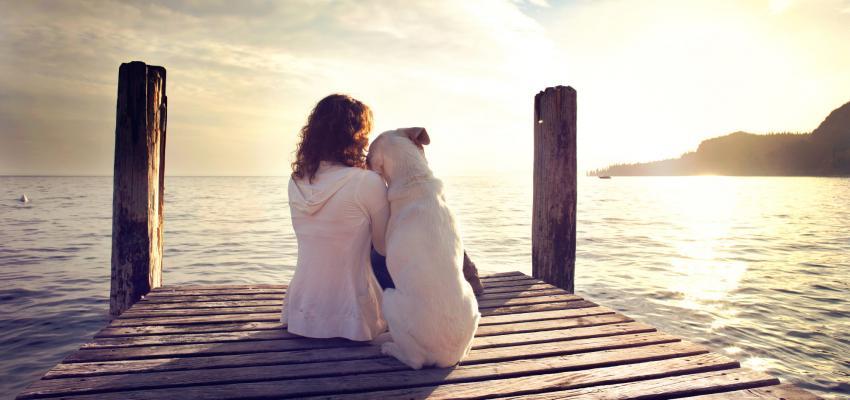 7 ensinamentos que os nossos cães podem nos trazer