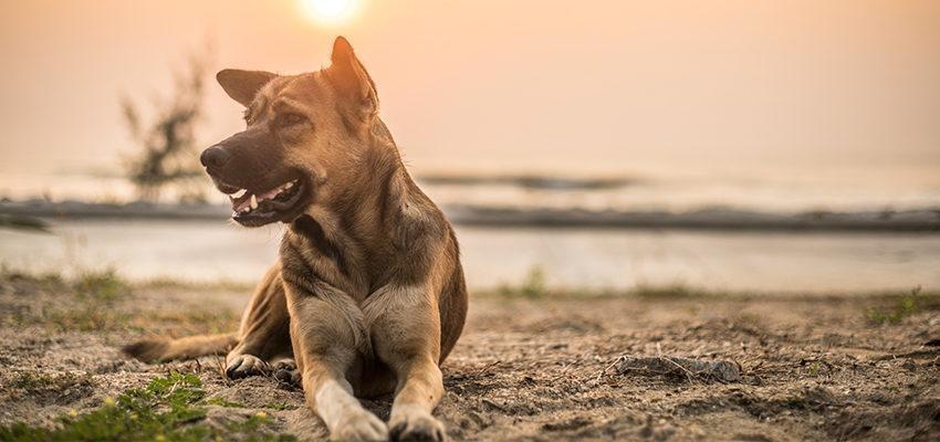 Espírito: os cães o reconhecem?