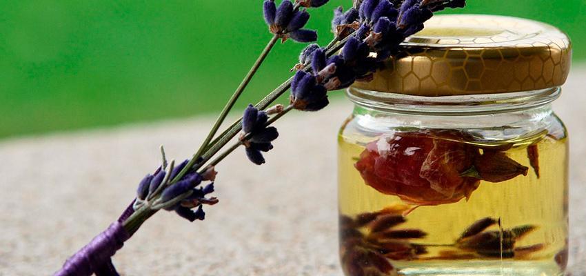 9 óleos essenciais que repelem naturalmente insetos e aracnídeos
