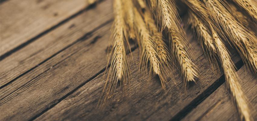 Descubra o significado da Parábola do Joio e do Trigo