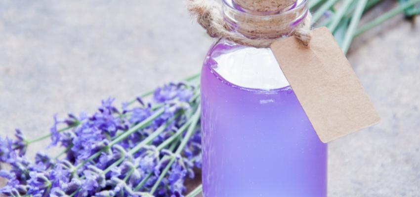 Como usar a alfazema e aproveitar suas propriedades medicinais?