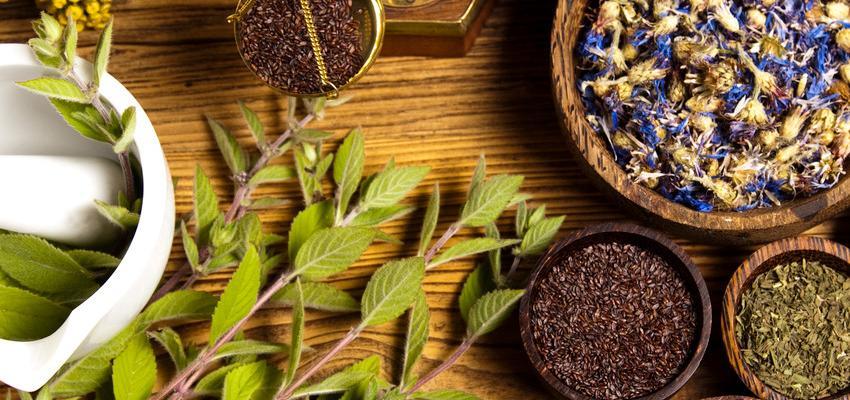 Alquimia das Ervas – 7 dicas para atrair bons fluidos com as plantas
