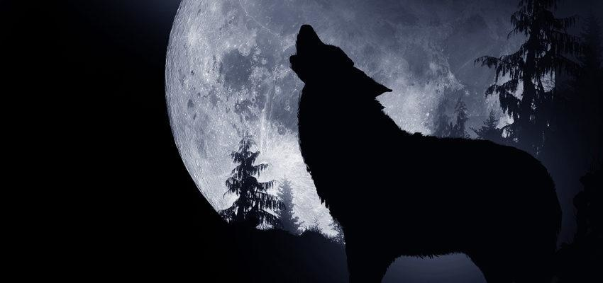 Descubra o significado místico dos animais