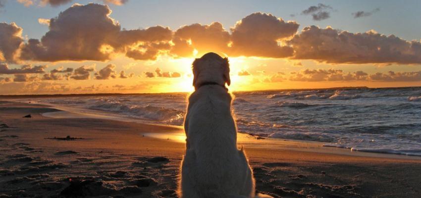 Céu dos animais: para onde os animais vão após a morte?