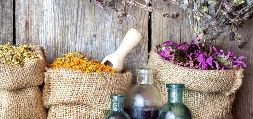 Guia de Florais: conheça as 38 essências para o equilíbrio emocional