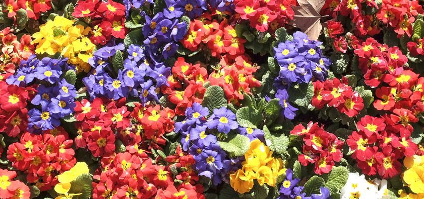 As flores e os signos
