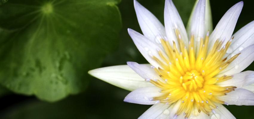 Doshas: conheça os elementos que definem um biotipo na Ayurveda