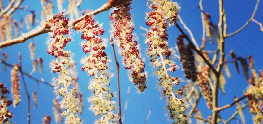 Aspen - um floral para quem tem medo do desconhecido