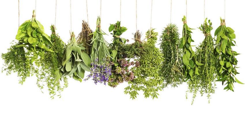 Alcance a prosperidade com os banhos de ervas