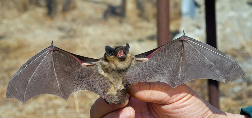 Entenda o que significa sonhar com morcego