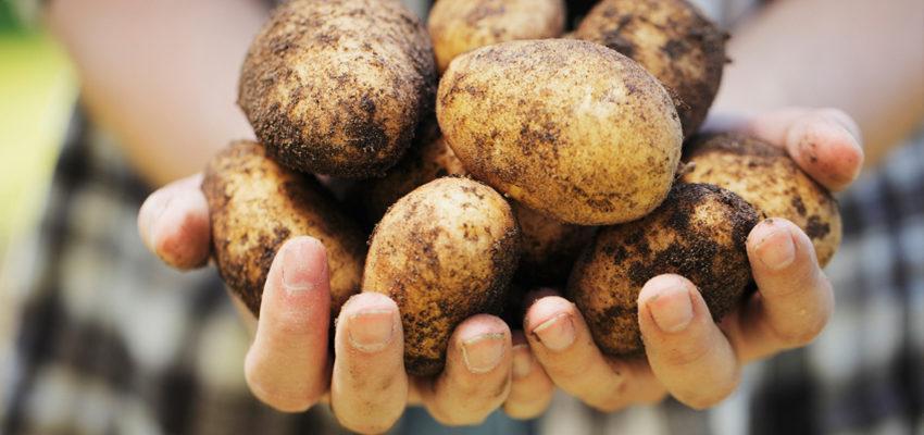 Simpatia da batata para fazer o seu amado te procurar