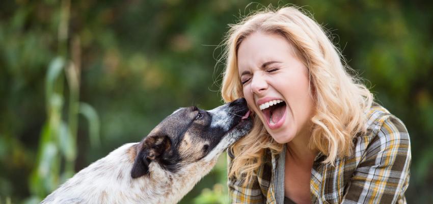 Cães e espiritualidade: Por que eles lambem as pessoas?