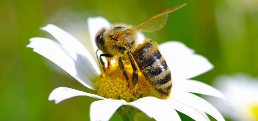 O que significa sonhar com abelha? Entenda as possibilidades