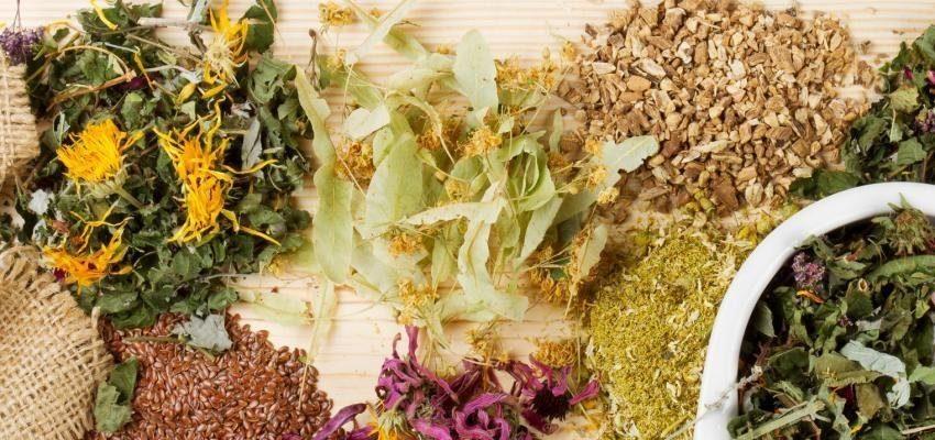 Benzeduras e simpatias com arruda, louro e outras ervas poderosas