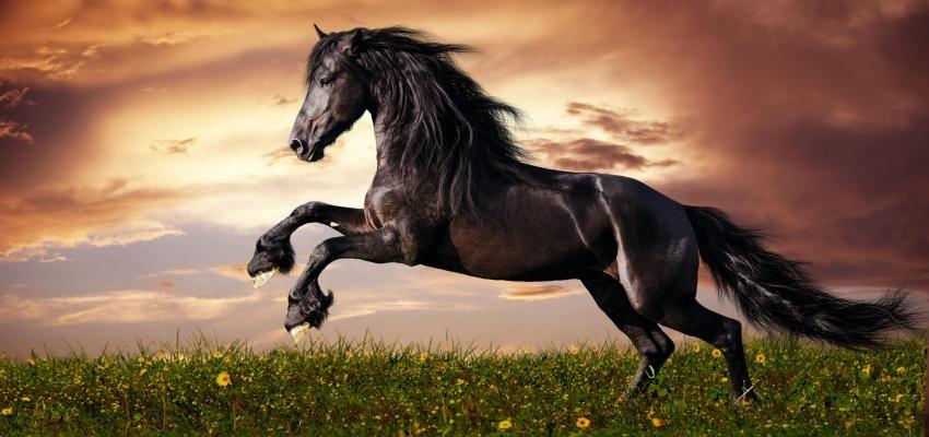 Descubra qual o significado de sonhar com cavalo