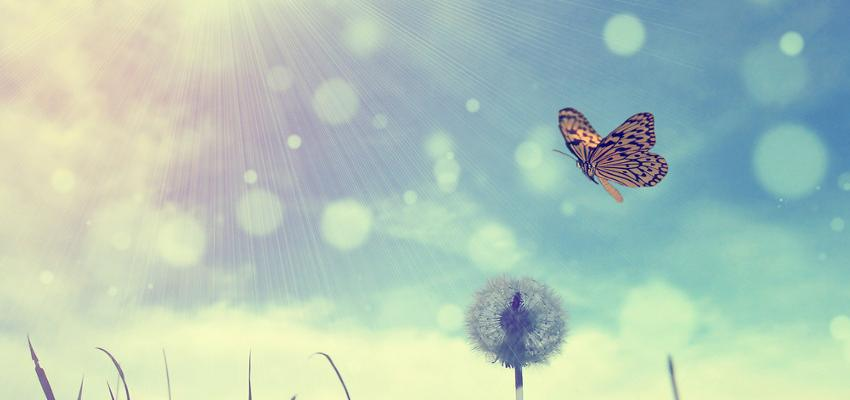 O significado da borboleta em diversas culturas
