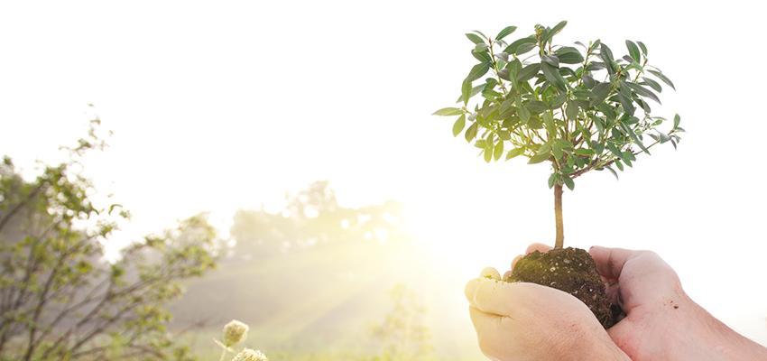 A oração poderosa das plantas: energia e gratidão