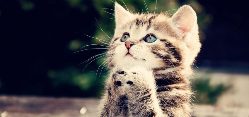 Cristais de cura para gatos: dicas e pedras para saúde e bem-estar