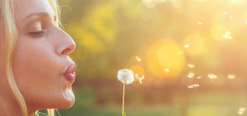 Dente-de-leão para o corpo e alma: entenda a simplicidade desta flor