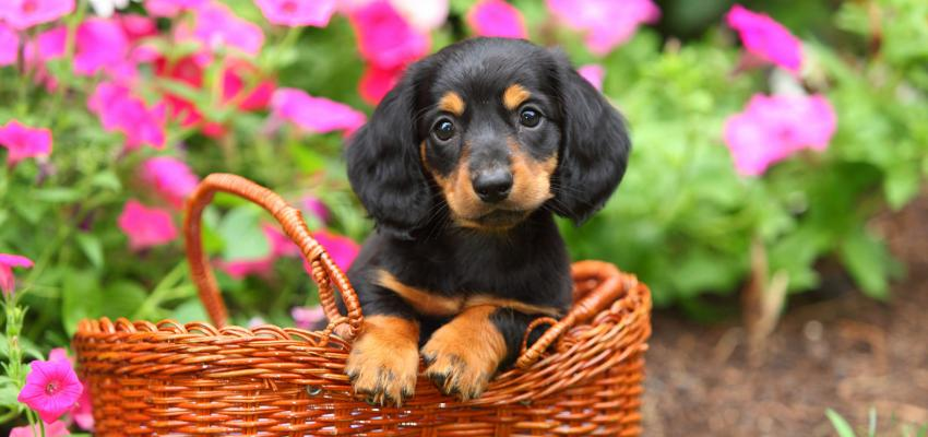Como escolher os melhores florais para seu cachorro
