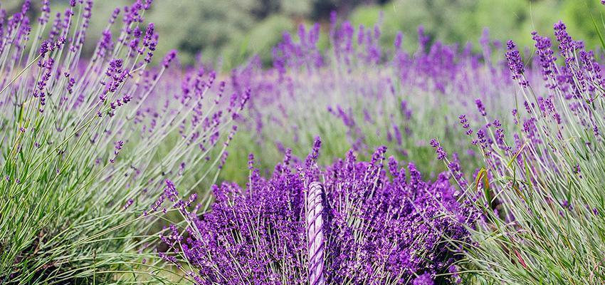Como usar a aromaterapia para ter mais alegria em sua vida